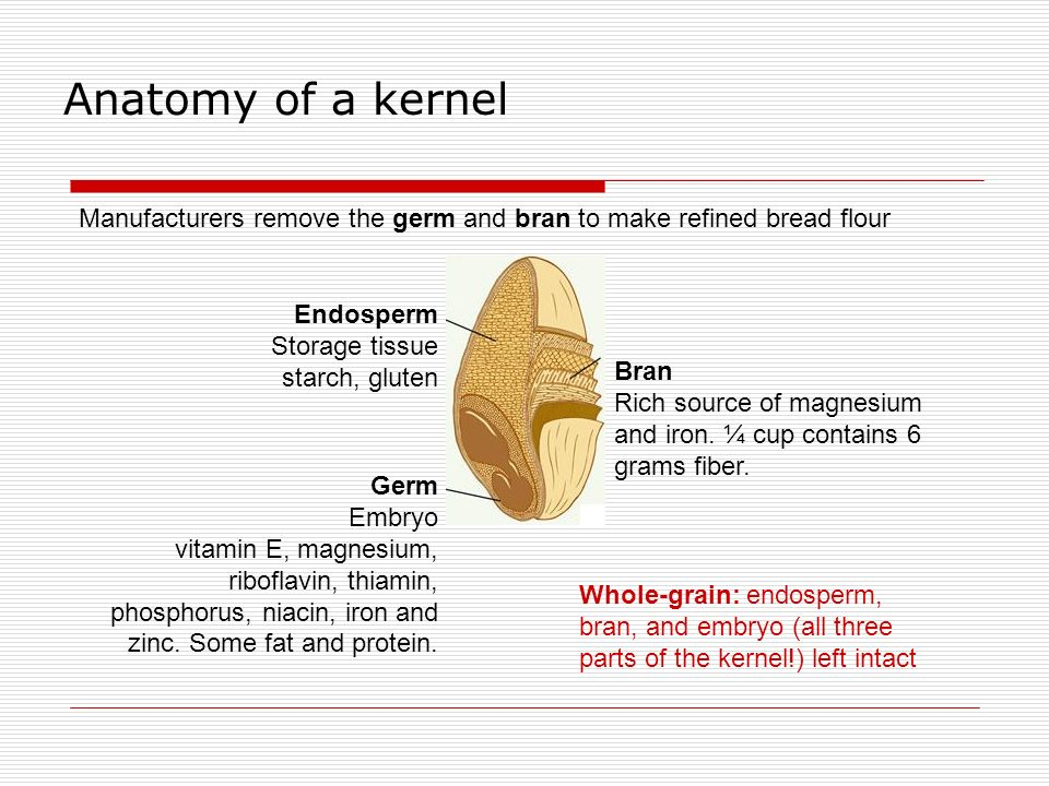 Anatomy of a kernel Manufacturers remove the germ and bran to make refined bread flour. Endosperm.