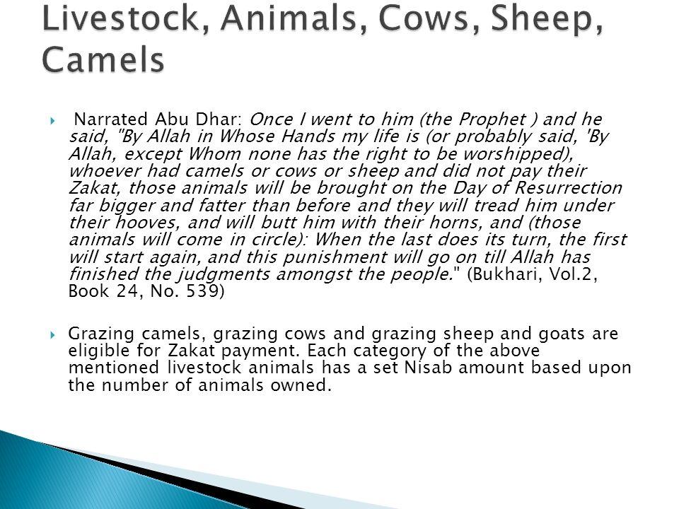 Livestock, Animals, Cows, Sheep, Camels