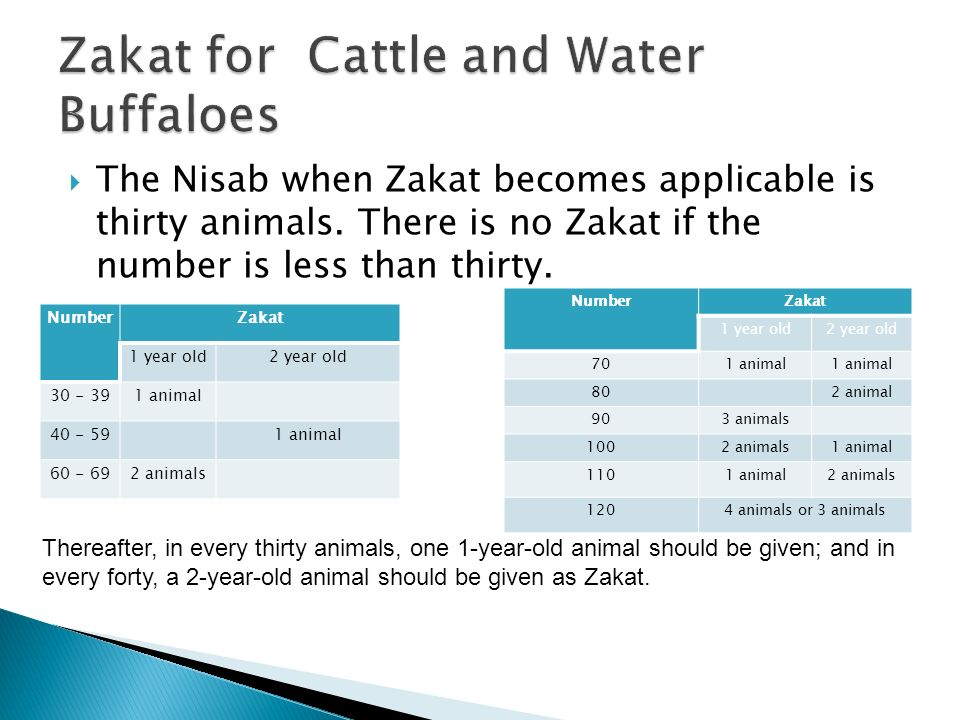 Zakat for Cattle and Water Buffaloes