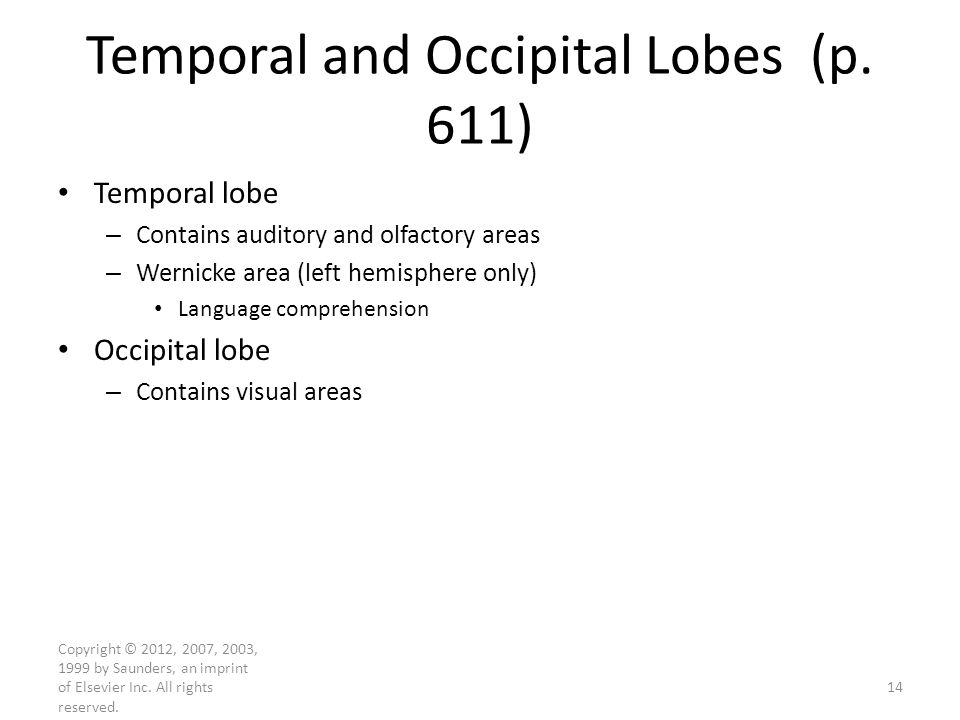 Temporal and Occipital Lobes (p. 611)