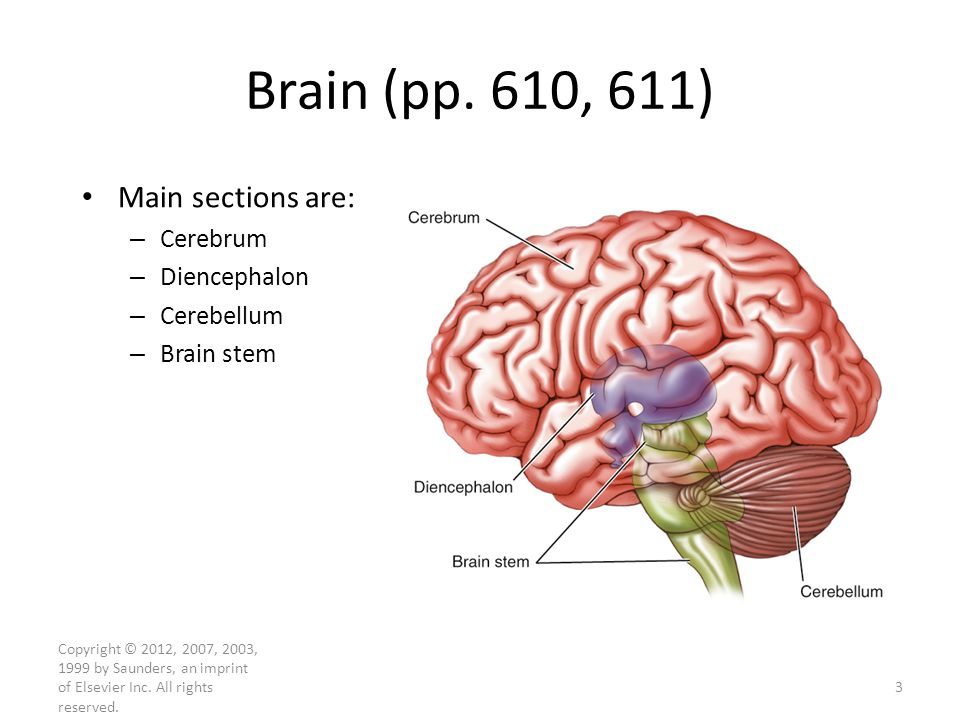 Brain (pp. 610, 611) Main sections are: Cerebrum Diencephalon