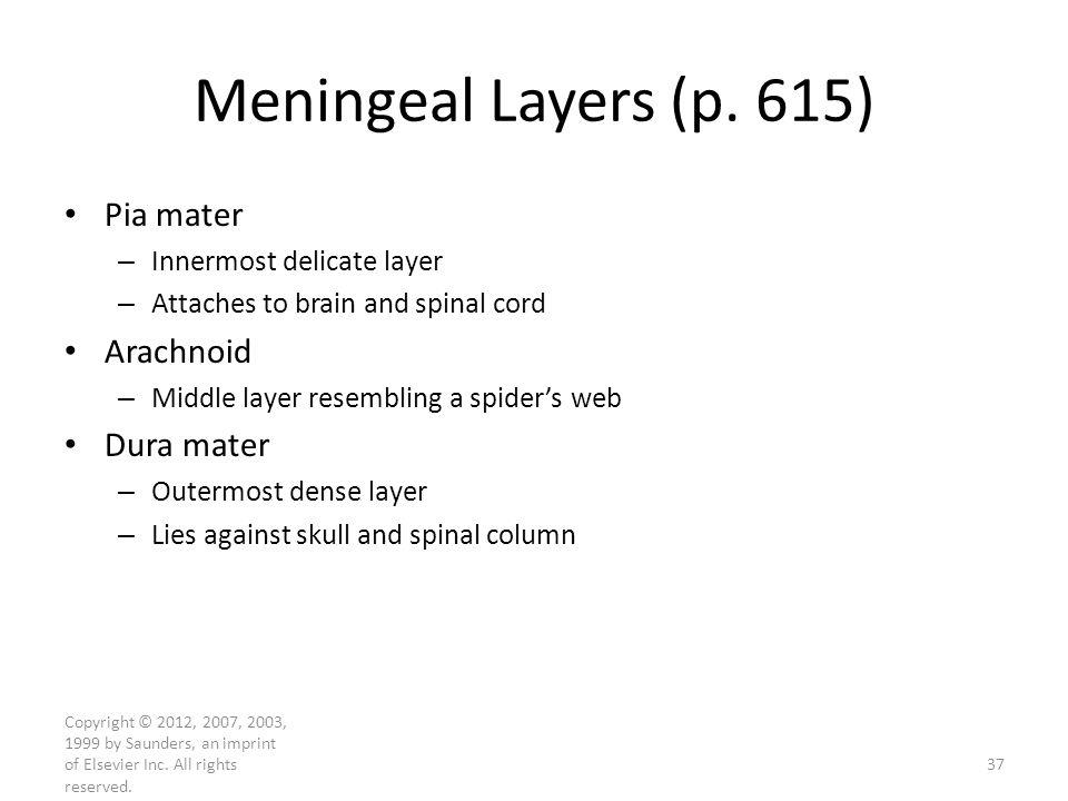 Meningeal Layers (p. 615) Pia mater Arachnoid Dura mater