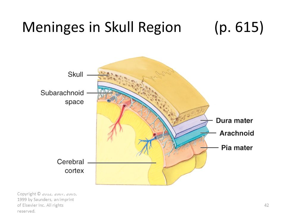 Meninges in Skull Region (p. 615)
