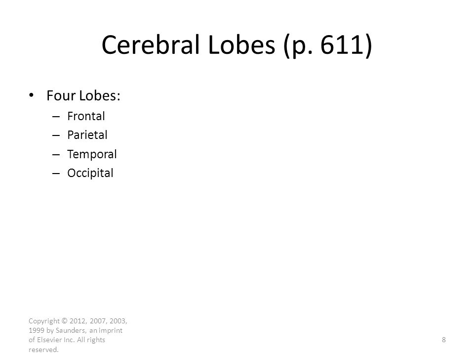 Cerebral Lobes (p. 611) Four Lobes: Frontal Parietal Temporal