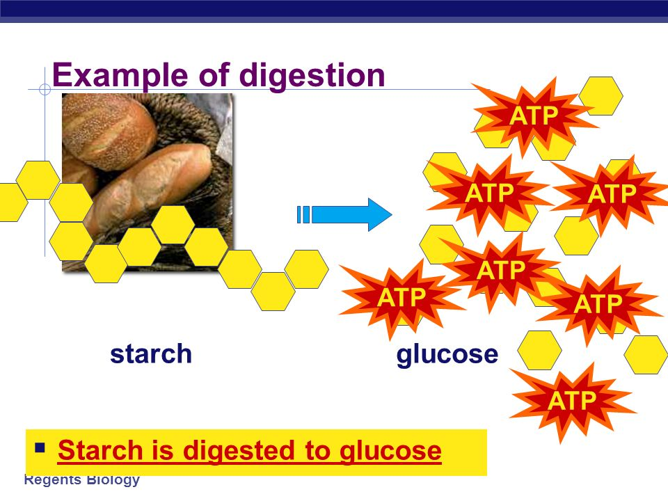 Example of digestion starch glucose Starch is digested to glucose ATP