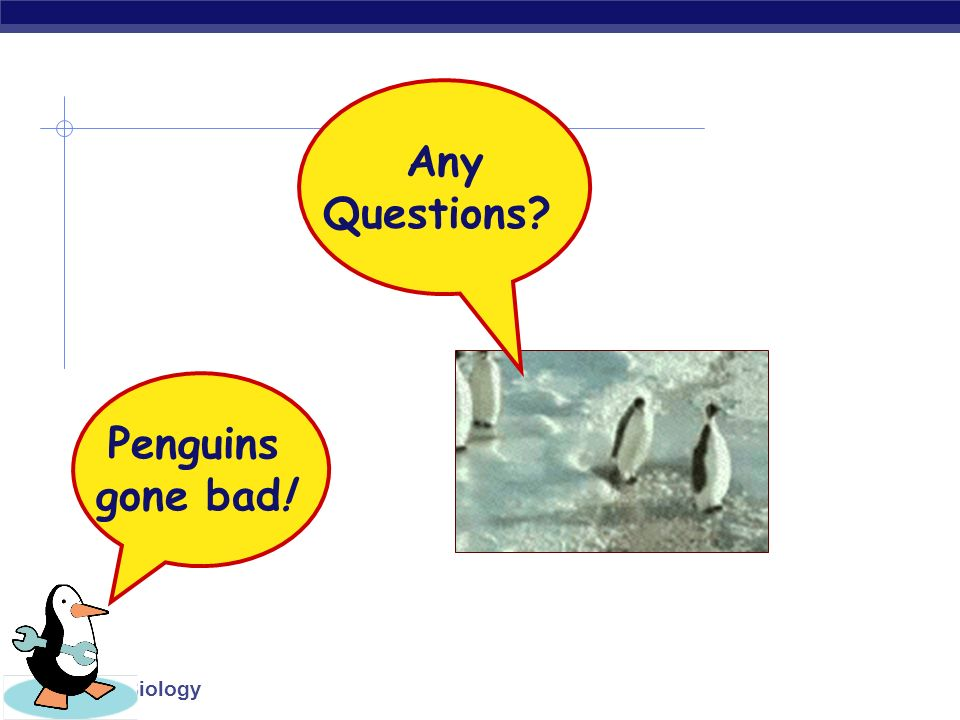 Any Questions Penguins gone bad!