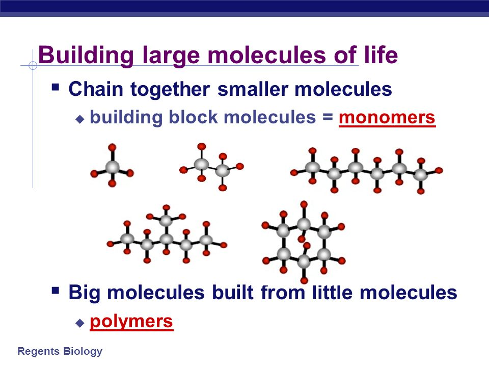 Building large molecules of life