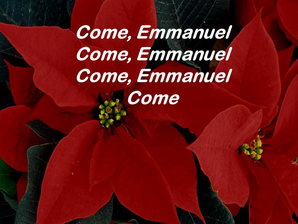 Come, Emmanuel Come