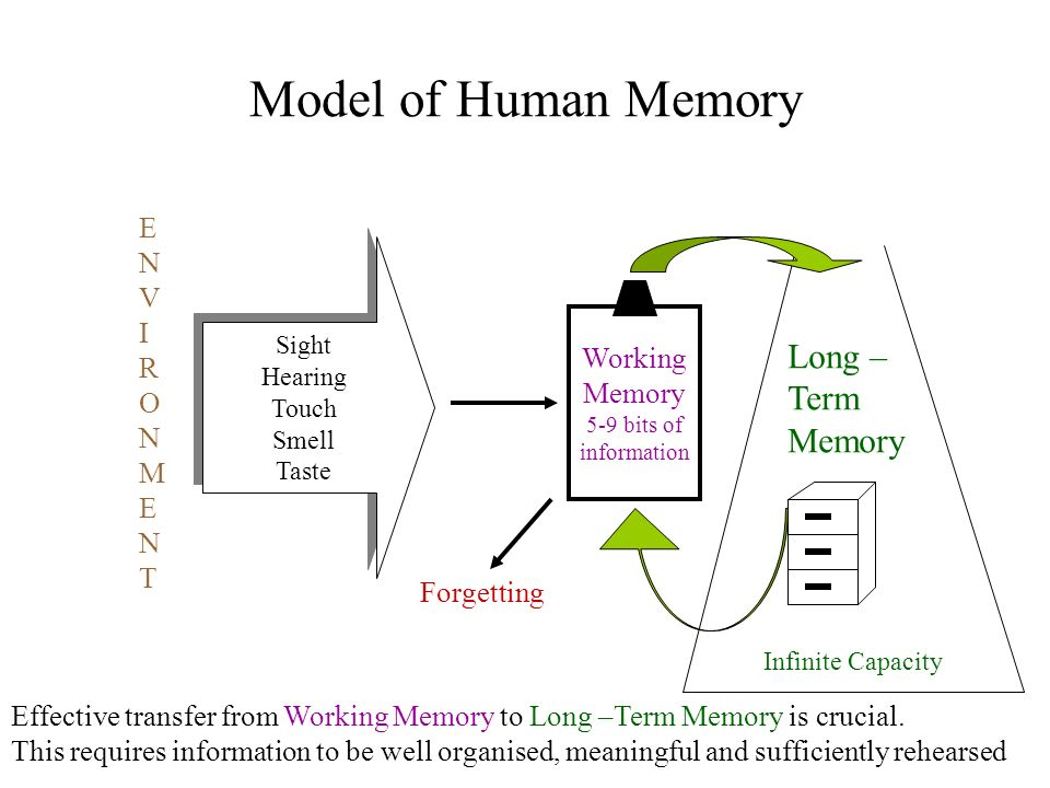 Model of Human Memory Long – Term Memory E N V I R O Working M Memory