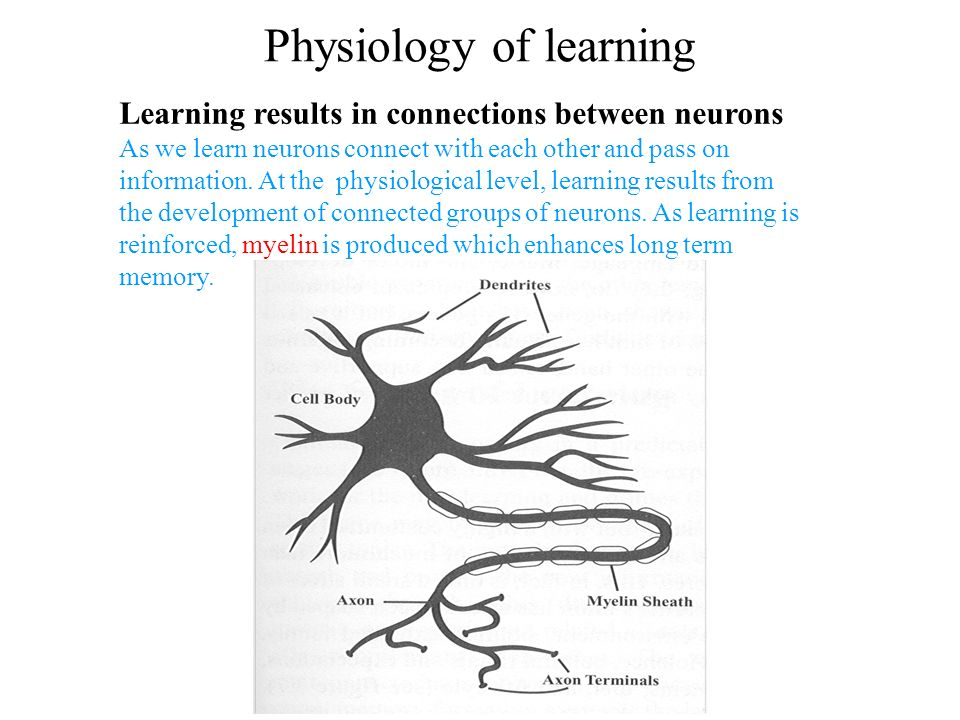 Physiology of learning