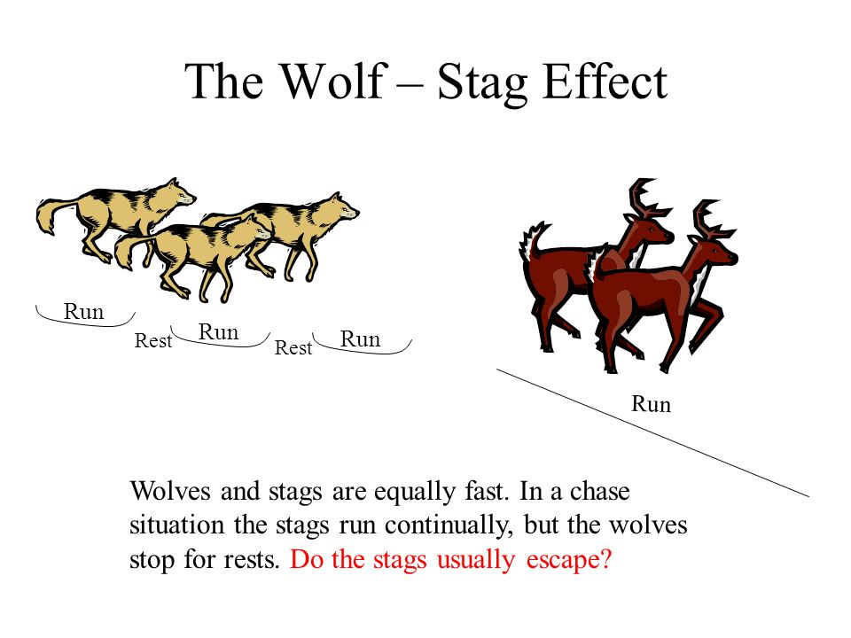 The Wolf – Stag Effect Wolves and stags are equally fast. In a chase