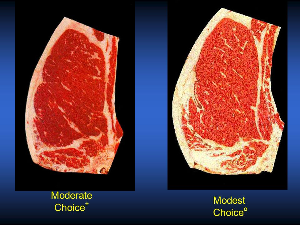 Moderate Choice+ Modest Choiceo