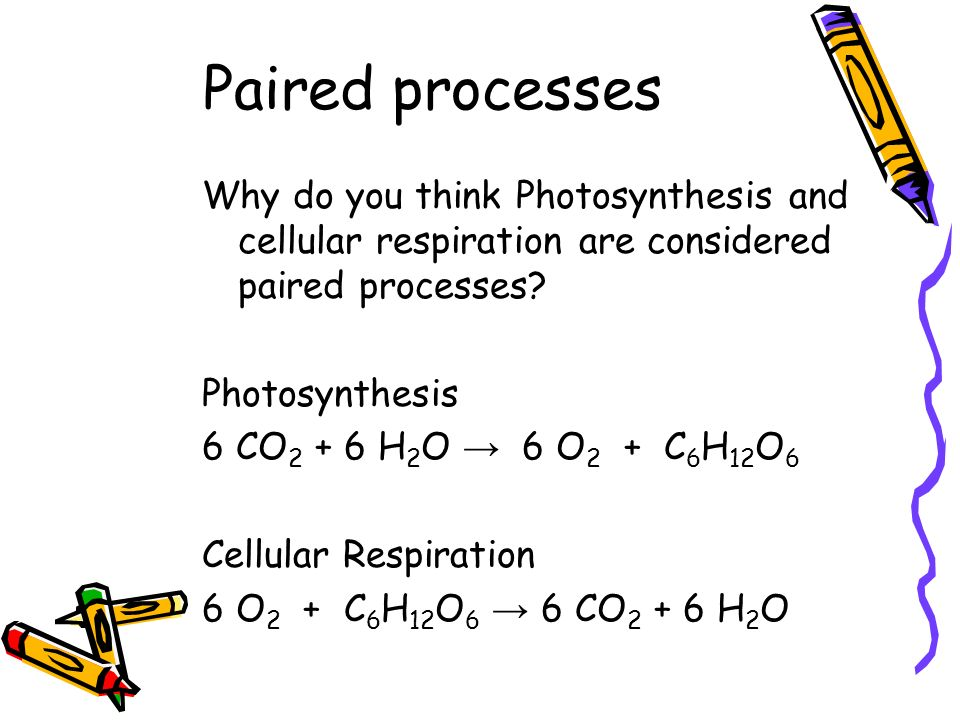 Paired processes Why do you think Photosynthesis and cellular respiration are considered paired processes