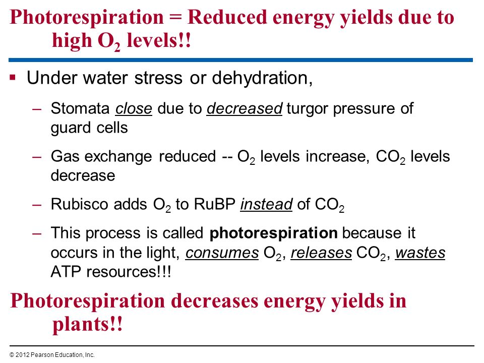 Photorespiration decreases energy yields in plants!!