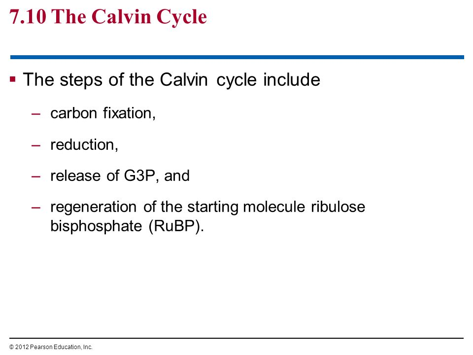 7.10 The Calvin Cycle The steps of the Calvin cycle include