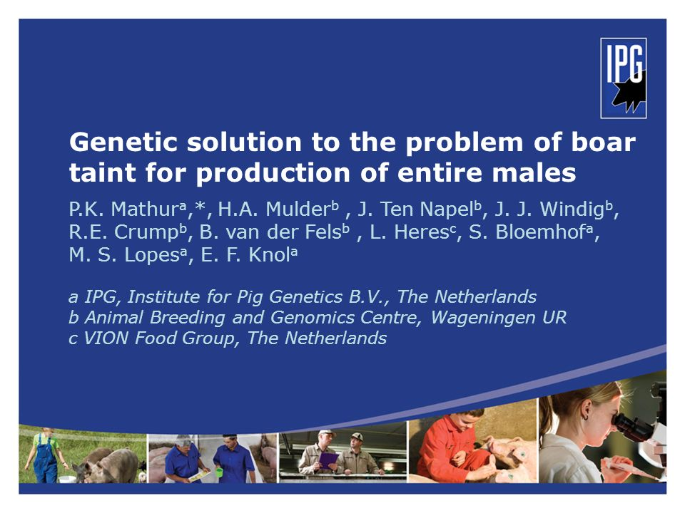 Genetic solution to the problem of boar taint for production of entire males