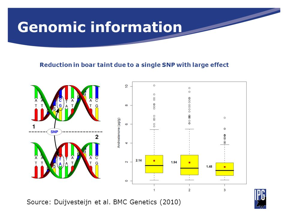 Genomic information Reduction in boar taint due to a single SNP with large effect.
