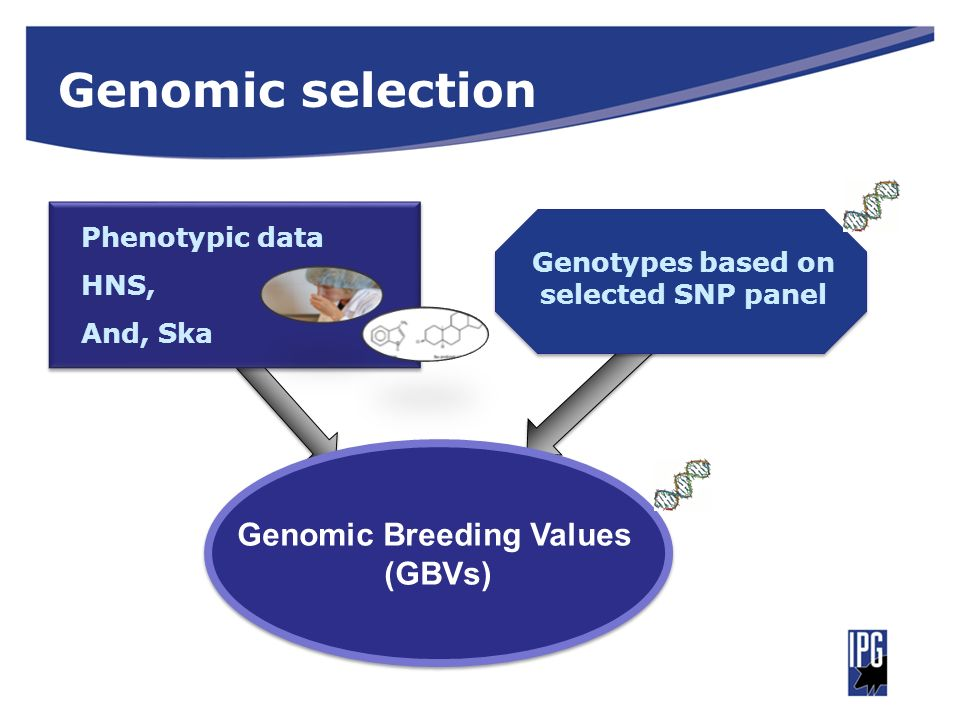 Genotypes based on selected SNP panel Genomic Breeding Values