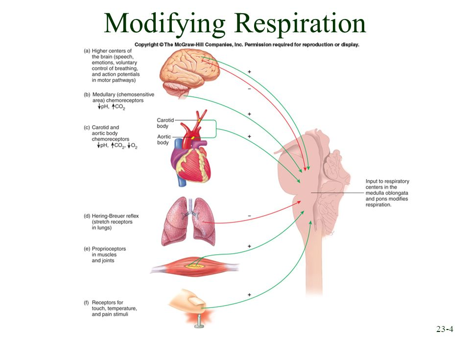 Modifying Respiration