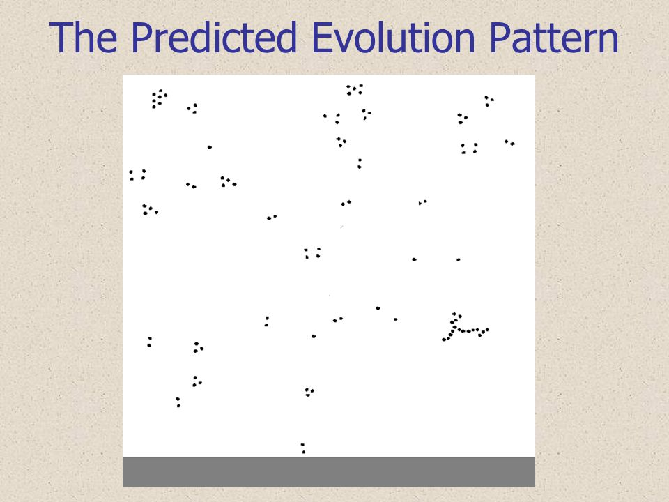 The Predicted Evolution Pattern