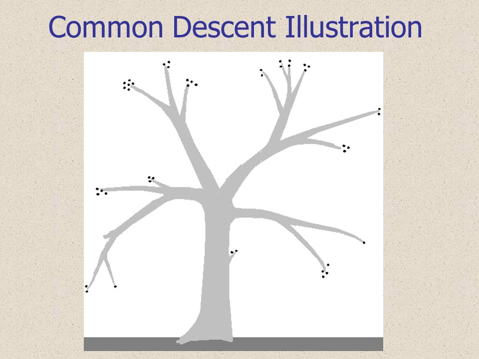 Common Descent Illustration