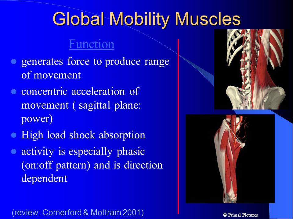 Global Mobility Muscles