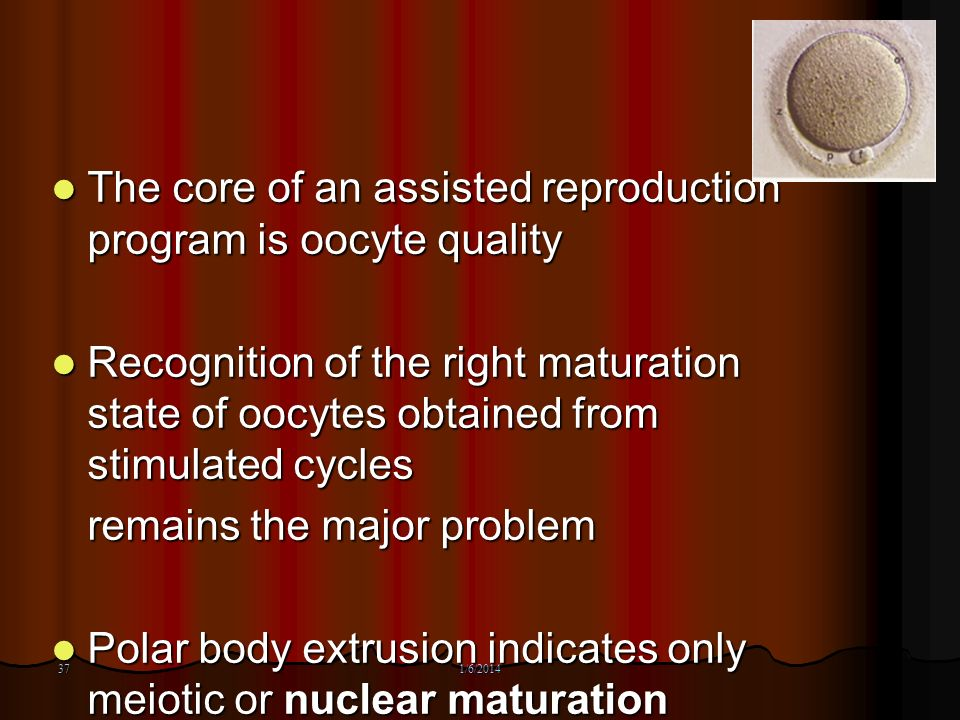 The core of an assisted reproduction program is oocyte quality