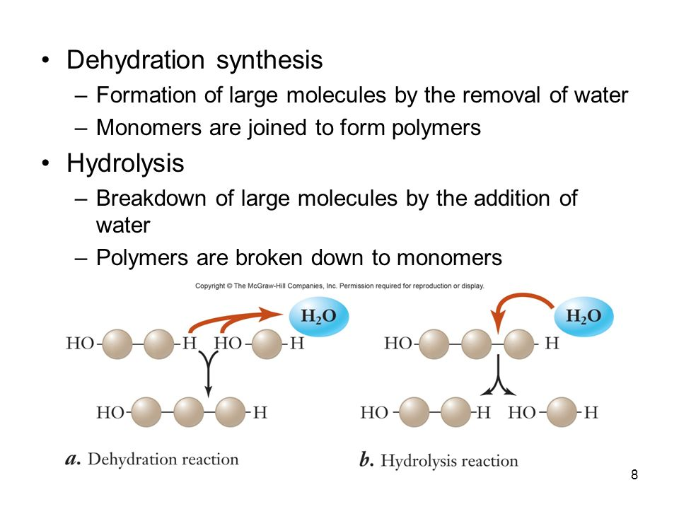 relationship between dehydration synthesis and hydrolysis definition