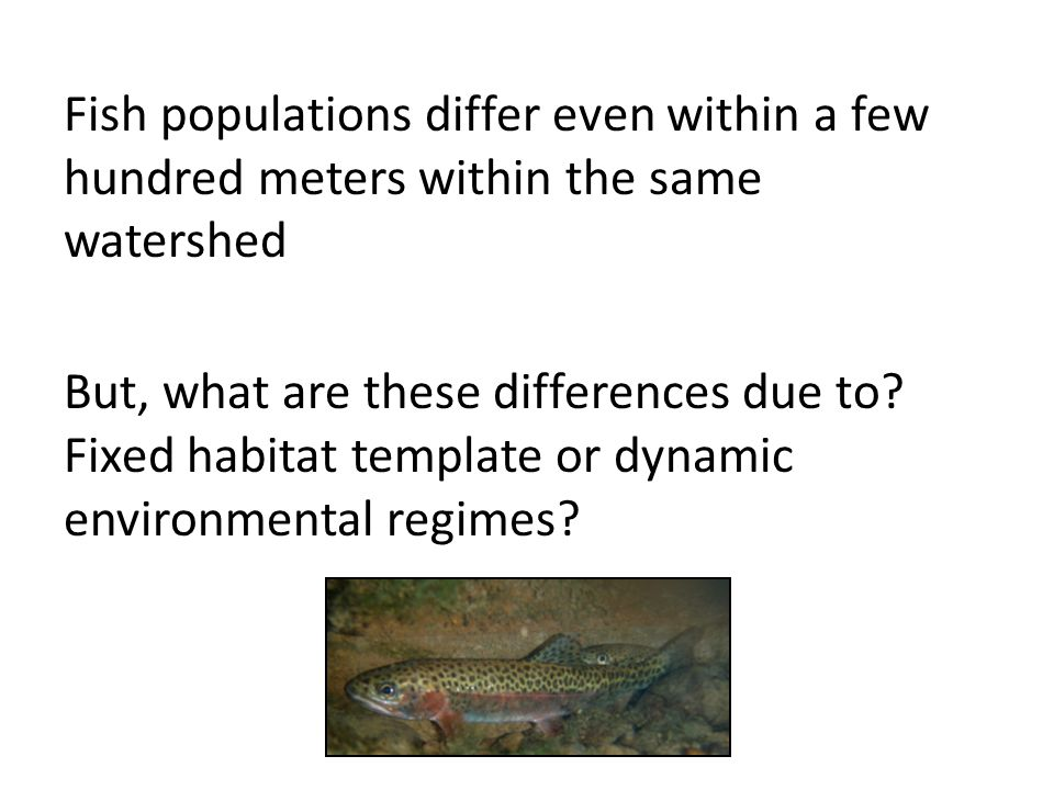 Fish populations differ even within a few hundred meters within the same watershed