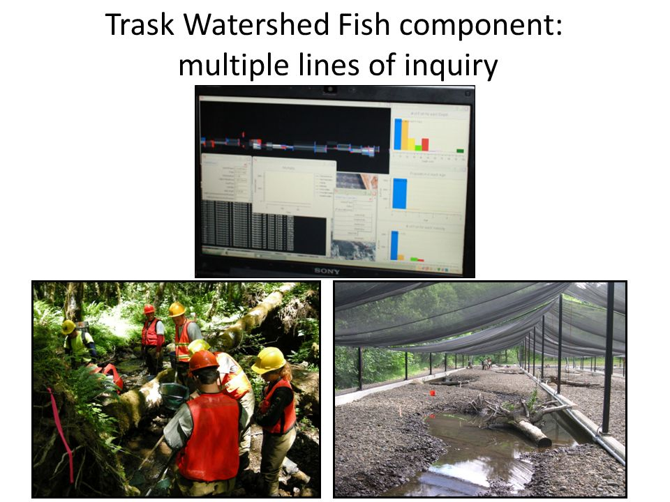 Trask Watershed Fish component: multiple lines of inquiry
