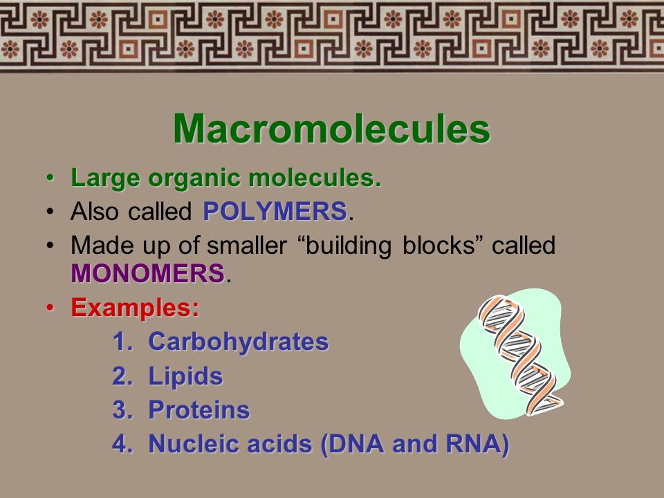 Macromolecules Large organic molecules. Also called POLYMERS.