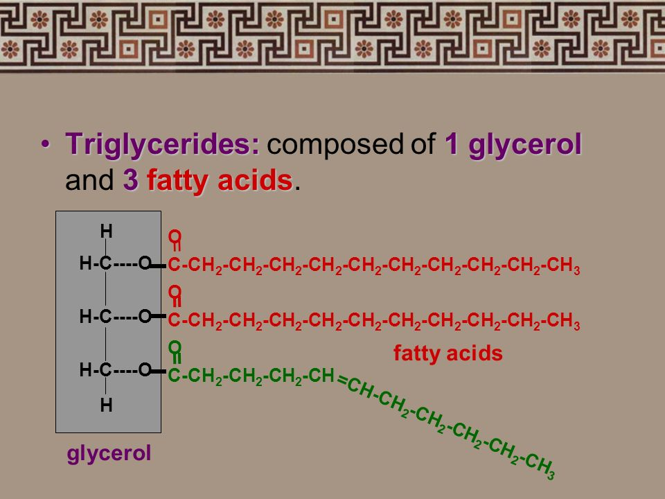 Triglycerides: composed of 1 glycerol and 3 fatty acids.