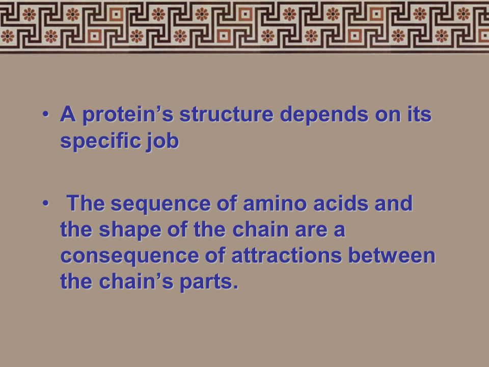 A protein's structure depends on its specific job