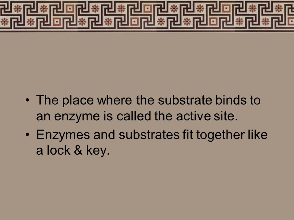 The place where the substrate binds to an enzyme is called the active site.