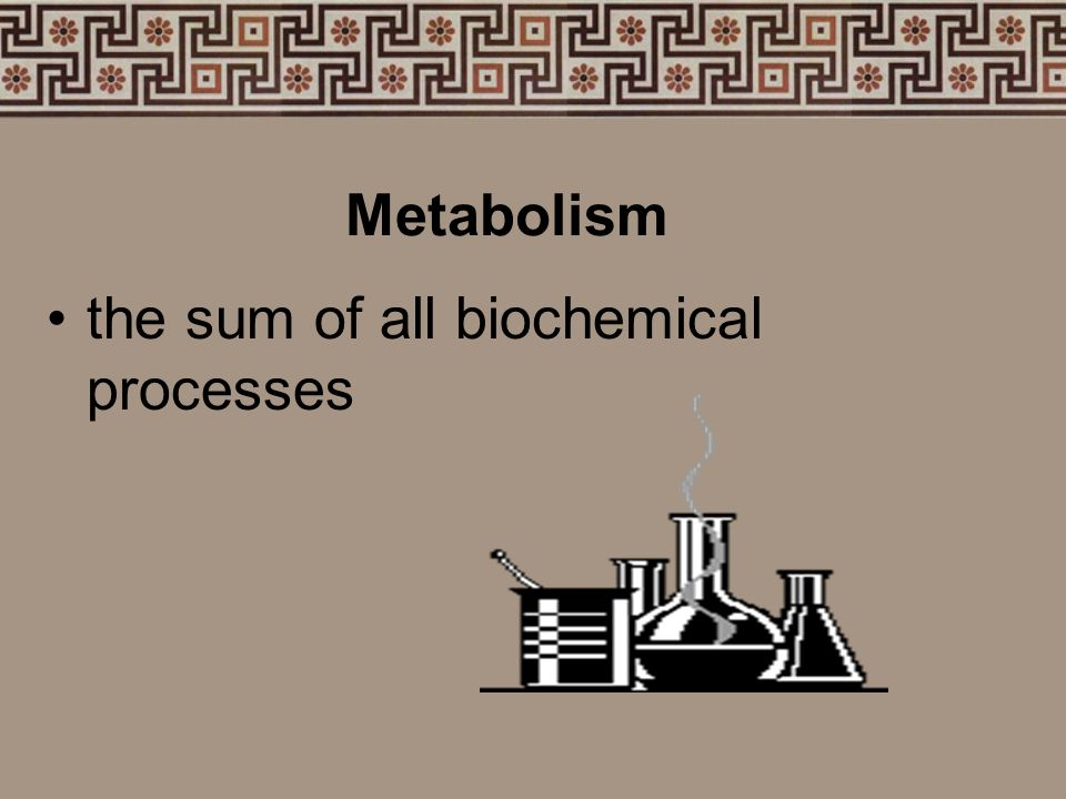 Metabolism the sum of all biochemical processes