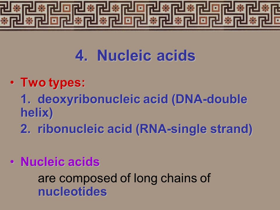 4. Nucleic acids Two types: