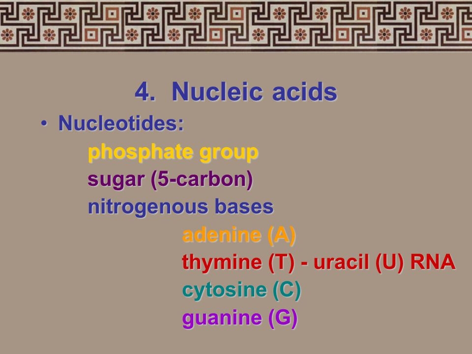 4. Nucleic acids Nucleotides: phosphate group sugar (5-carbon)