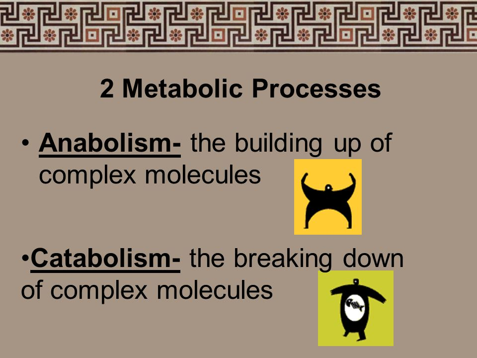 2 Metabolic Processes Anabolism- the building up of complex molecules.