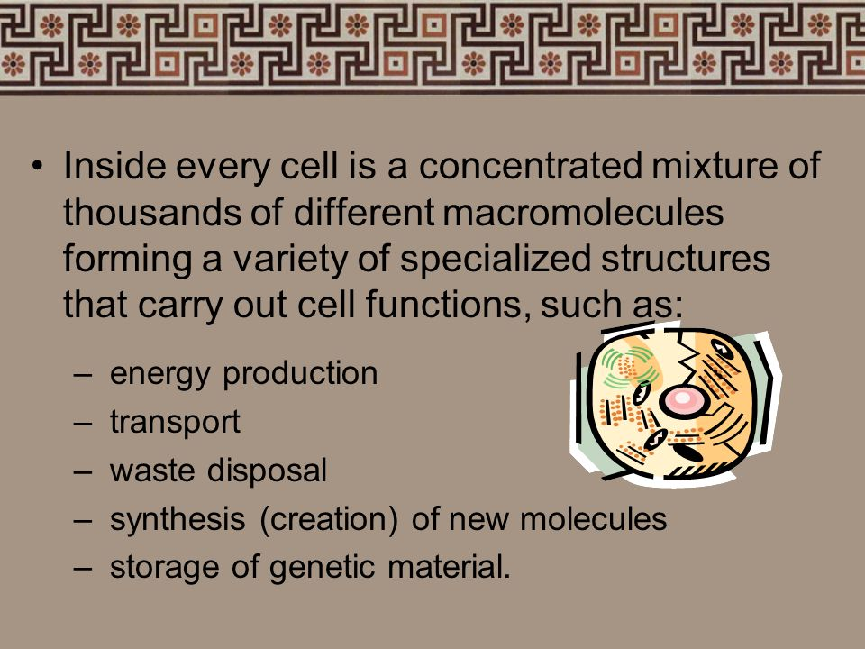 Inside every cell is a concentrated mixture of thousands of different macromolecules forming a variety of specialized structures that carry out cell functions, such as: