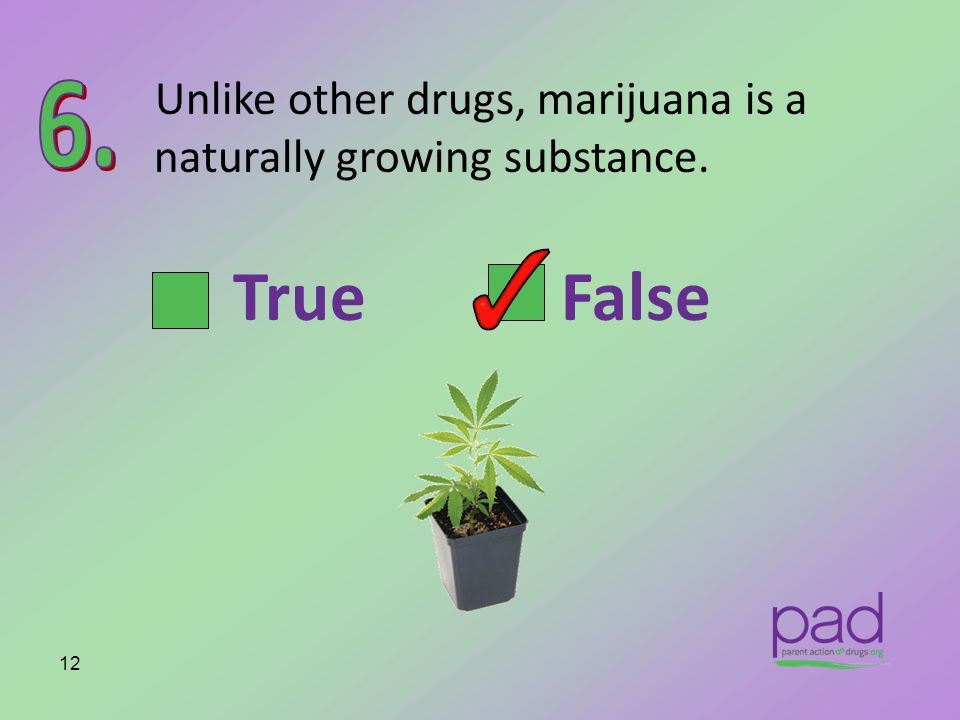 Unlike other drugs, marijuana is a naturally growing substance.
