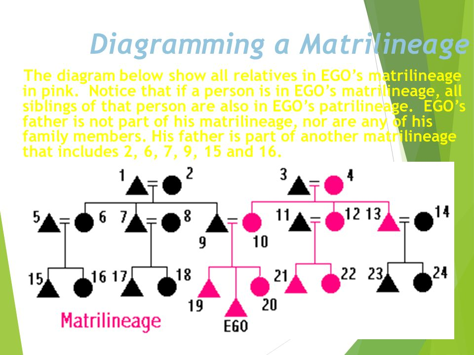 Diagramming a Matrilineage