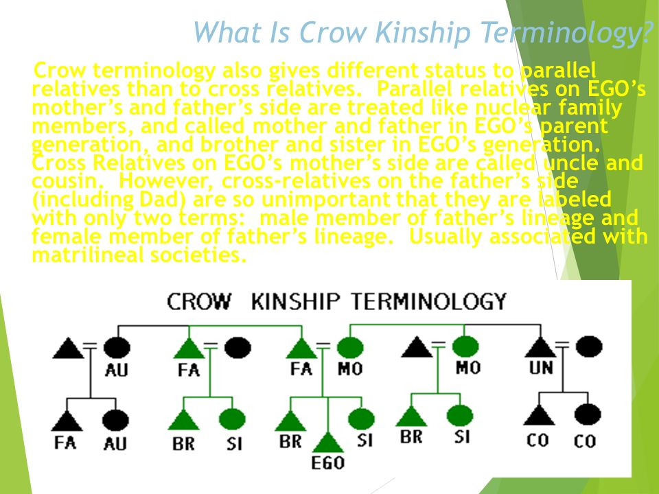 What Is Crow Kinship Terminology