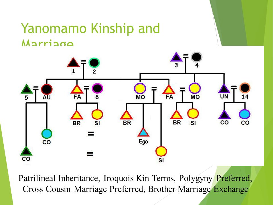 Yanomamo Kinship and Marriage A Practical Application