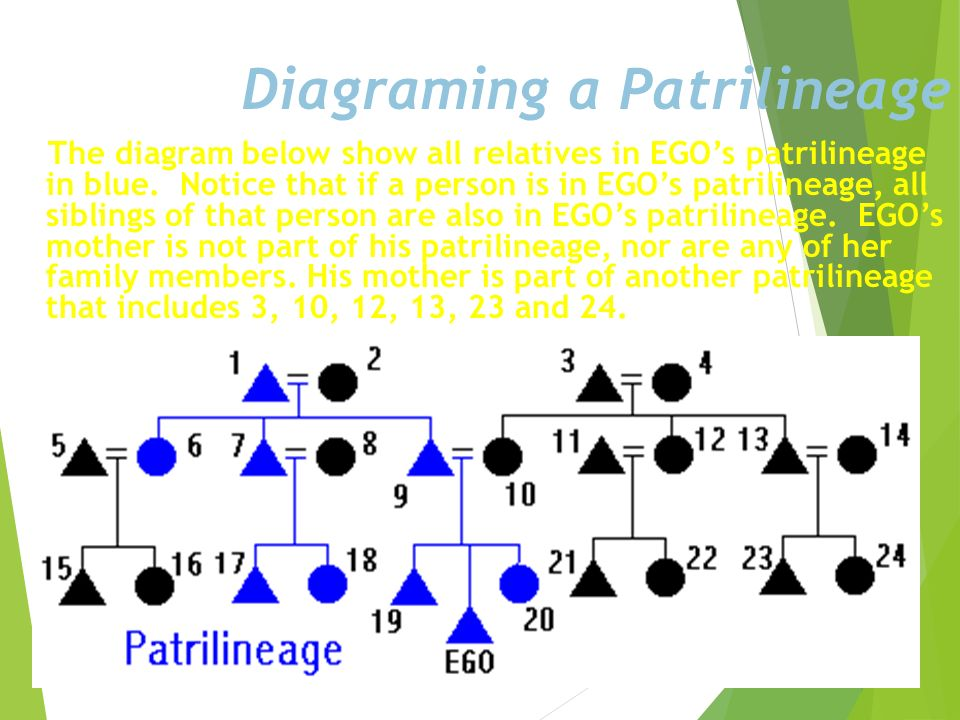 Diagraming a Patrilineage