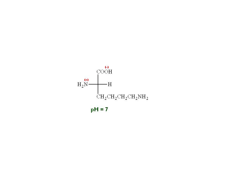 (–) (+) pH = 7