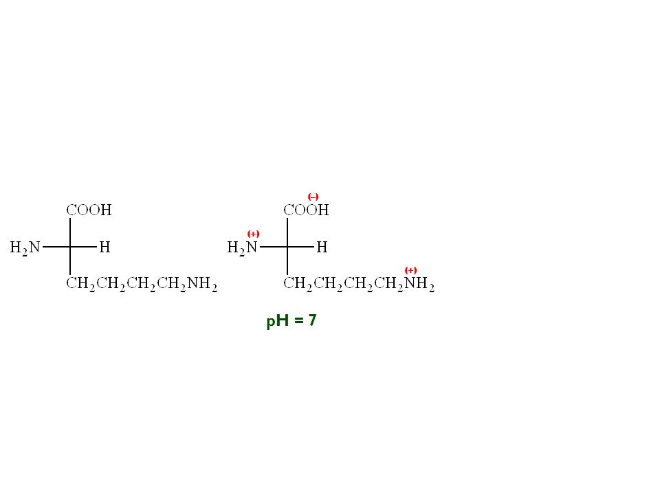 (–) (+) (+) pH = 7