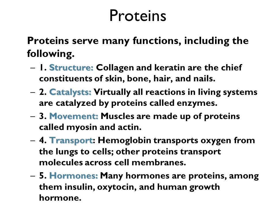 Proteins Proteins serve many functions, including the following.