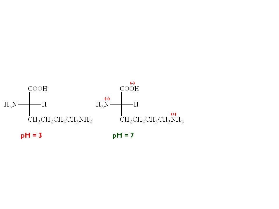 (–) (+) (+) pH = 3 pH = 7