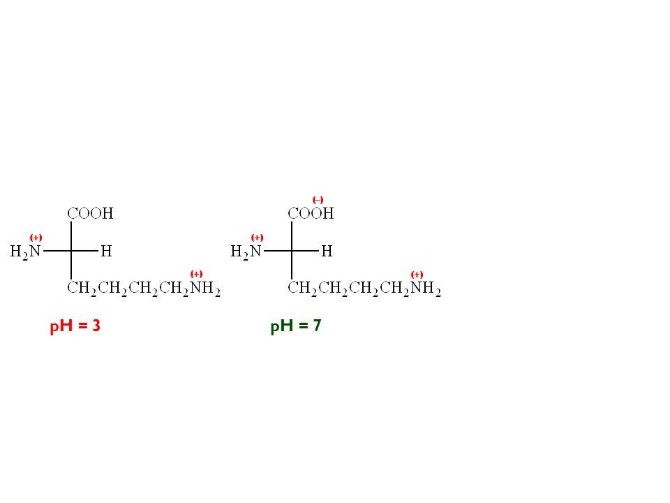 (–) (+) (+) (+) (+) pH = 3 pH = 7