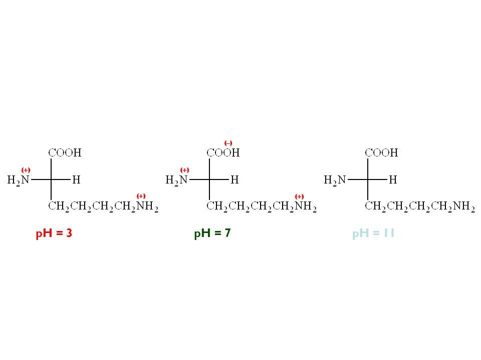 (–) (+) (+) (+) (+) pH = 3 pH = 7 pH = 11